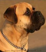 Chrome Plated Shining Chain Choke Collar for Bullmastiff - 1/9 inch (3.00 mm)