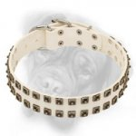 Elegant White Bullmastiff Collar with Nickel Square Dotted Studs