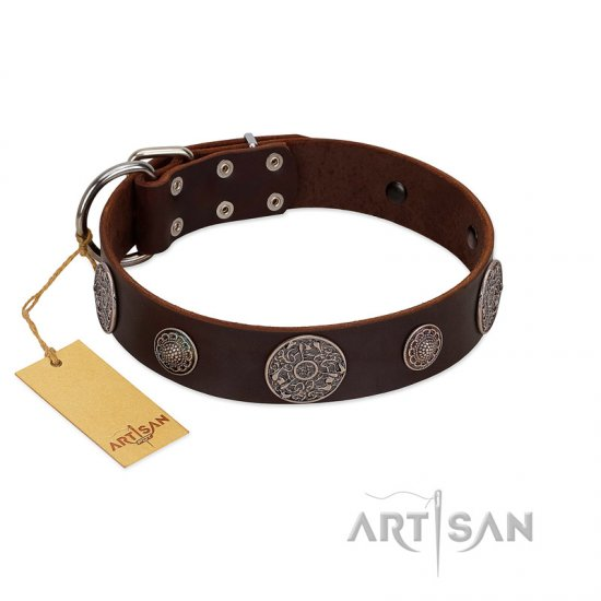 """Flashy Woof"" FDT Artisan Brown Leather Bullmastiff Collar with Chrome Plated Brooches"