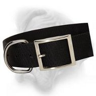 Wide 2 ply Nylon Dog Collar for everyday use