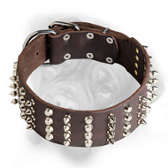 2 Inch Leather Bullmastiff Collar witn Nickel Pyramids and Spikes
