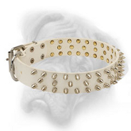 Stylish White Leather Bullmastiff Collar with 3 Rows of Nickel Spikes