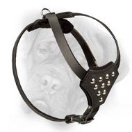 Trendy Leather Bullmastiff Puppy Harness with Nickel Studs