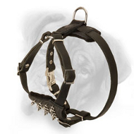 Stylish Leather Bullmastiff Puppy Harness Adorned with Nickel Spikes