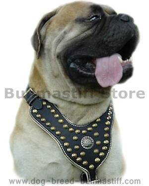 http://www.dog-breed-bullmastiff.com/images/Bullmastiffs_Large_dog_harnesses_best.jpg