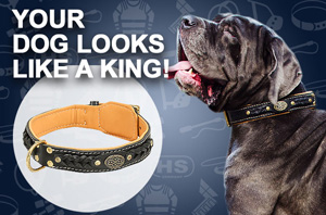 Leather Bullmastiff Collar