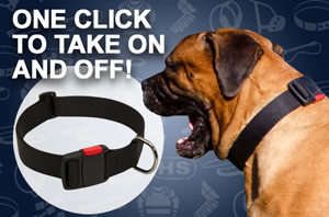 Nylon Bullmastiff Collar