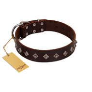 """Boundless Energy"" Premium Quality FDT Artisan Brown Designer Leather Bullmastiff Collar with Small Pyramids"