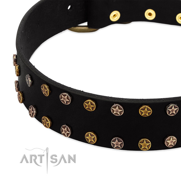 Unusual studs on genuine leather collar for your canine
