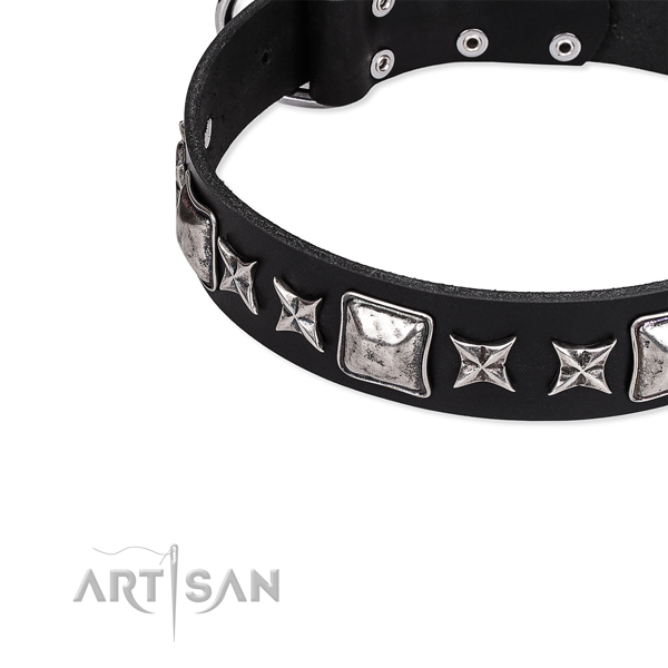 Walking studded dog collar of finest quality full grain genuine leather
