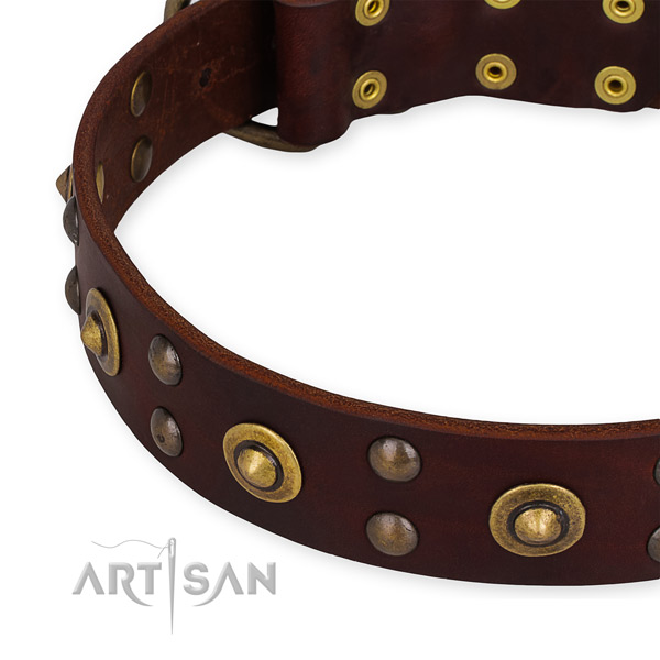 Genuine leather collar with corrosion resistant fittings for your handsome canine
