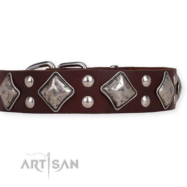 Full grain natural leather dog collar with significant corrosion proof studs