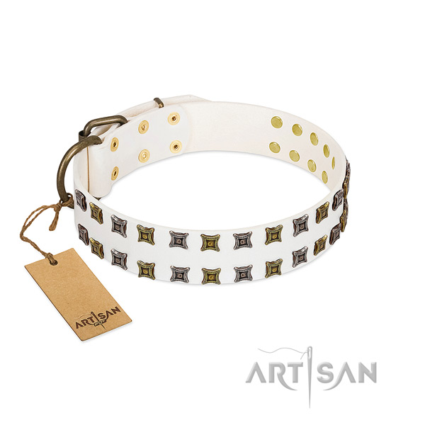 Natural leather collar with incredible adornments for your canine