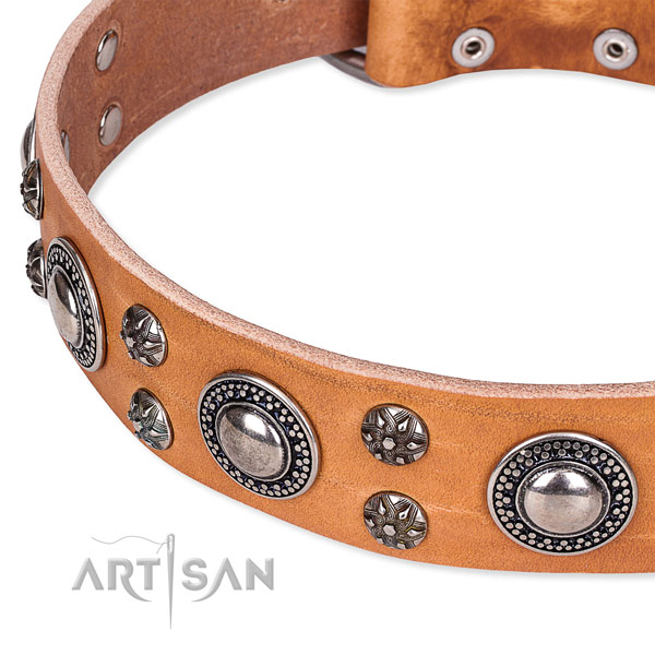 Fancy walking decorated dog collar of durable full grain leather