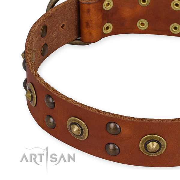 Full grain leather collar with corrosion proof buckle for your impressive dog