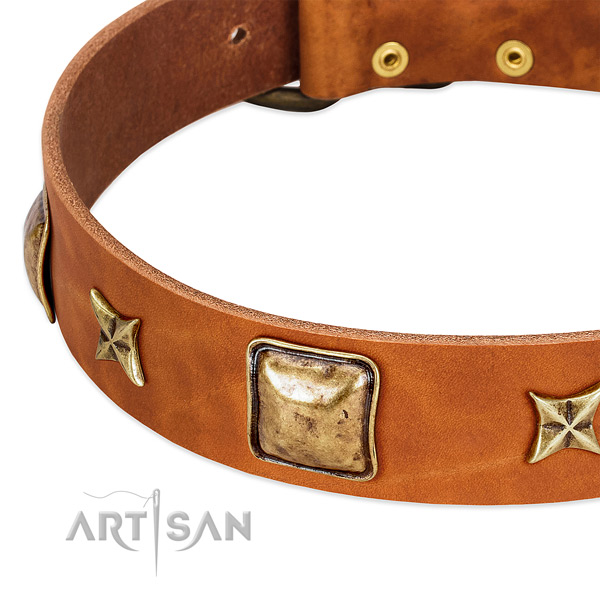 Strong embellishments on leather dog collar for your dog