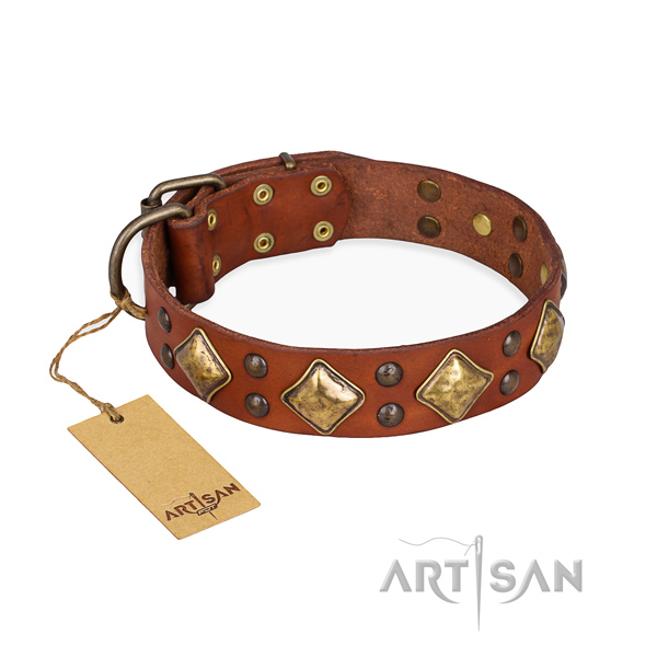 Stylish walking amazing dog collar with rust resistant fittings