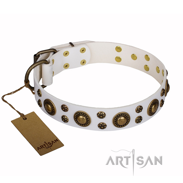 Daily use dog collar of quality natural leather with studs