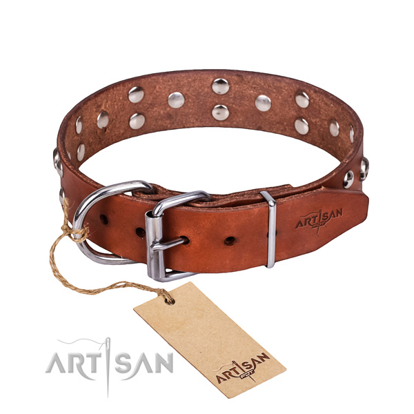 Basic training dog collar of reliable genuine leather with studs