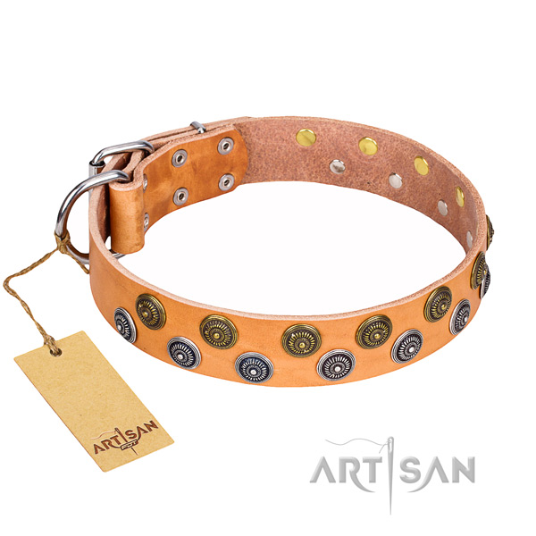 Walking dog collar of quality full grain genuine leather with studs