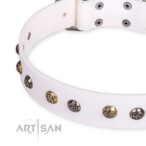 Full grain leather dog collar with fashionable corrosion proof embellishments