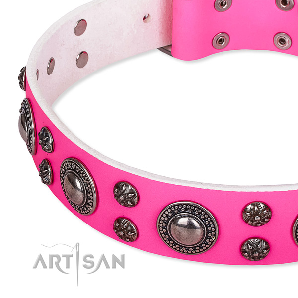 Fancy walking studded dog collar of top quality full grain leather