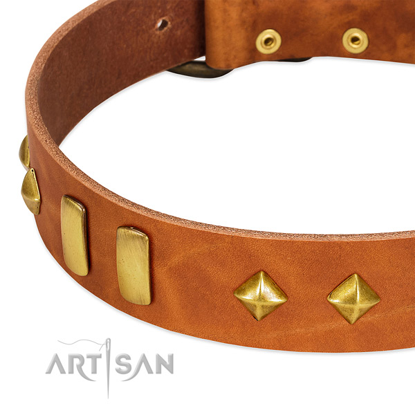 Walking leather dog collar with incredible embellishments