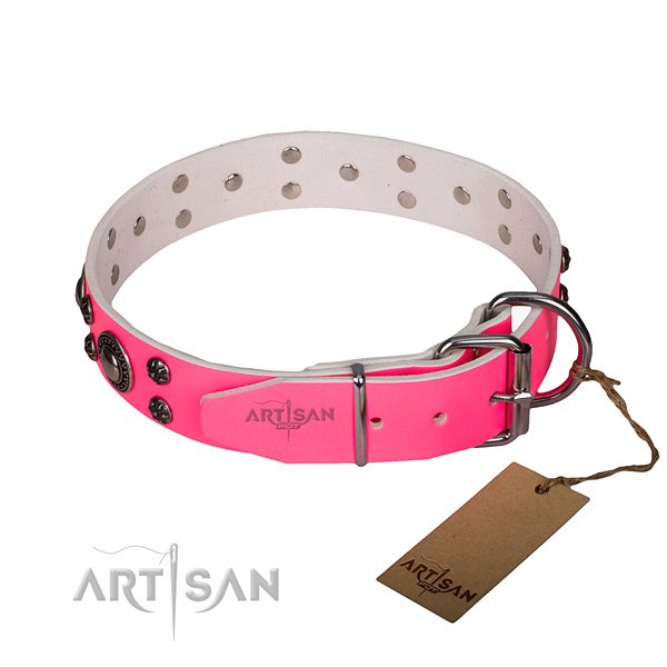 Everyday walking embellished dog collar of durable leather