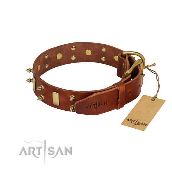 Comfy wearing adorned dog collar of quality full grain leather