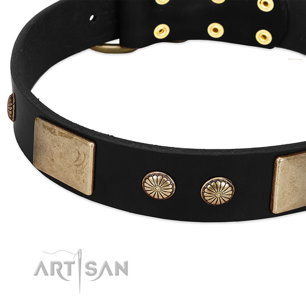 Full grain genuine leather dog collar with embellishments for walking