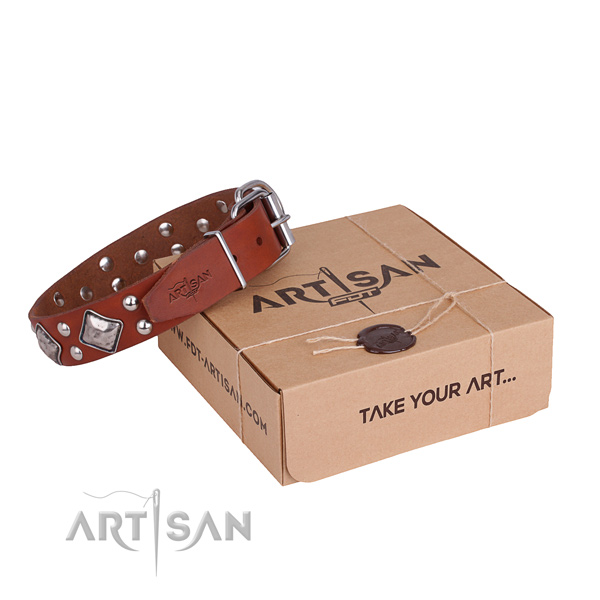 Everyday walking dog collar with Impressive rust-proof adornments