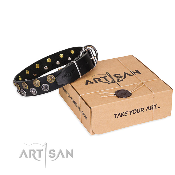 Stylish walking dog collar of finest quality genuine leather with embellishments