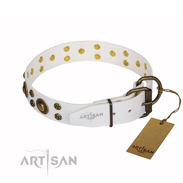 Walking studded dog collar of quality full grain genuine leather