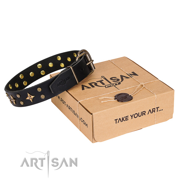 Fancy walking dog collar of quality full grain natural leather with adornments