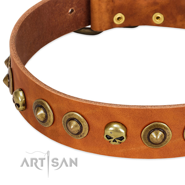 Incredible embellishments on genuine leather collar for your four-legged friend