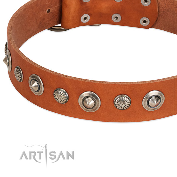 Full grain natural leather collar with rust resistant fittings for your handsome pet