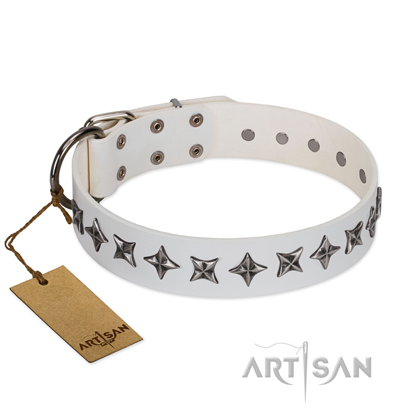 Fancy walking dog collar of strong full grain natural leather with studs