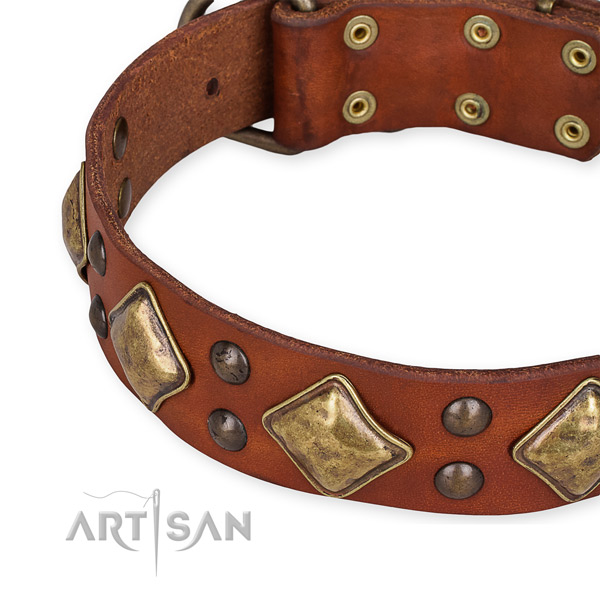 Natural leather collar with reliable fittings for your attractive doggie