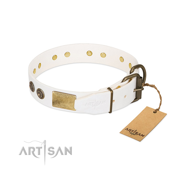Rust resistant buckle on full grain leather collar for walking your pet
