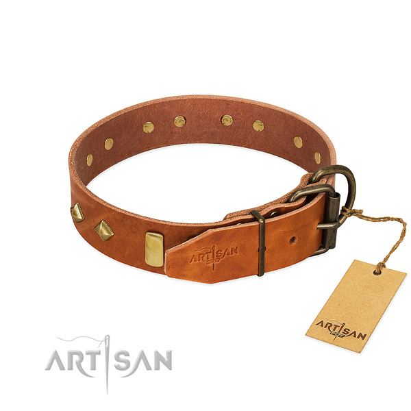 Daily use natural leather dog collar with incredible embellishments