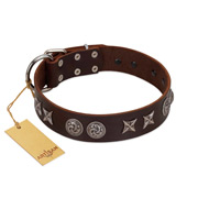 """Silver Sunset"" Designer Handmade FDT Artisan Brown Leather Bullmastiff Collar"
