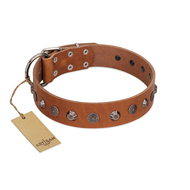 """Silver Age"" Fashionable FDT Artisan Tan Leather Bullmastiff Collar with Silver-Like Studs"