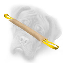 Bullmastiff bite tug for young dog training