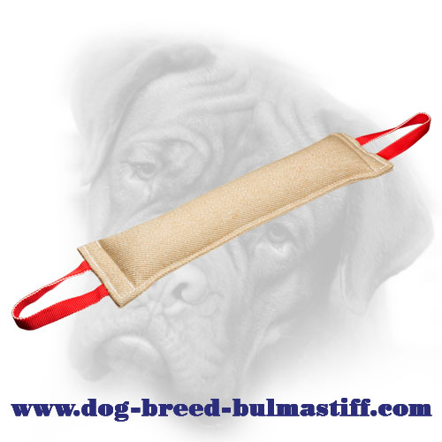 Bullmastiff jute tug for bite skills improvement