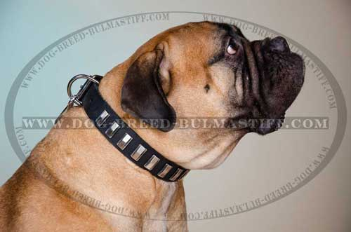 Leather Dog Collar decorated with plates