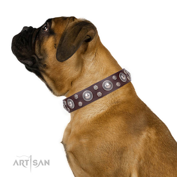 Daily walking adorned dog collar of durable genuine leather