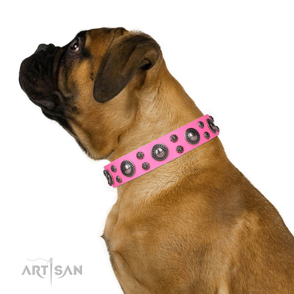 Everyday walking embellished dog collar of top quality natural leather