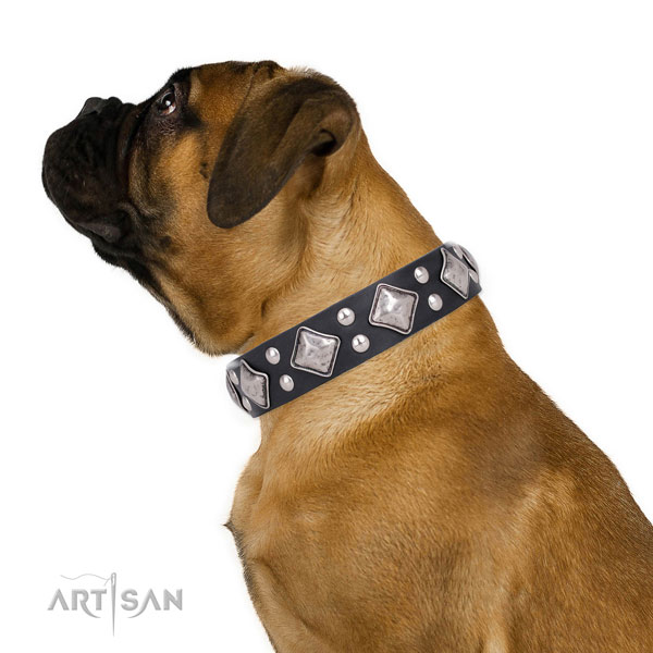 Everyday walking decorated dog collar made of strong leather