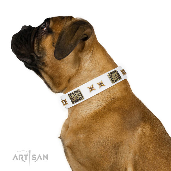 Stylish walking dog collar with incredible embellishments