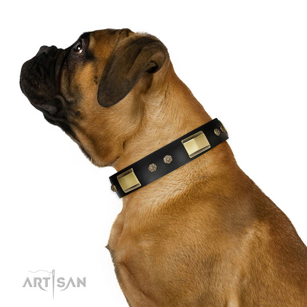 Basic training dog collar of genuine leather with exceptional adornments